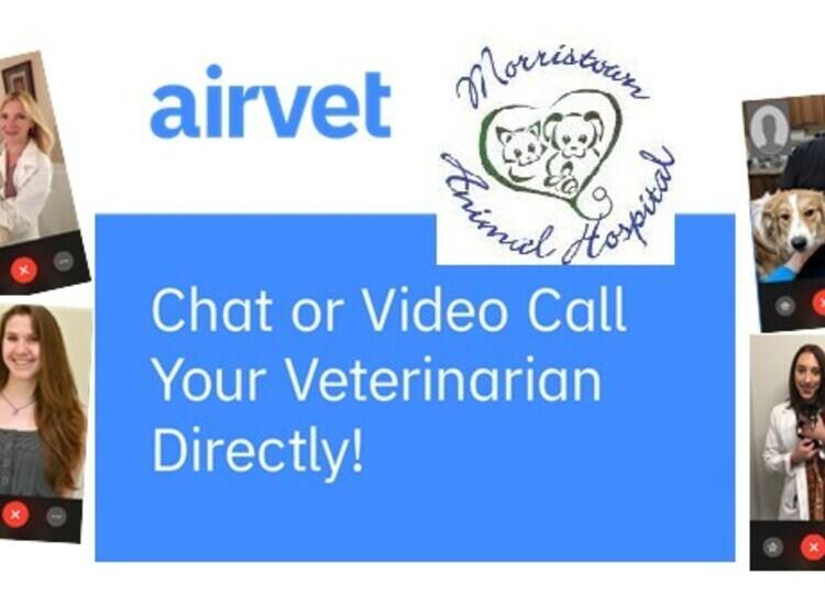 Download AIRVET to join your pet's exam virtually image