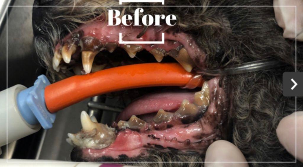 dentalbefore.jpg
