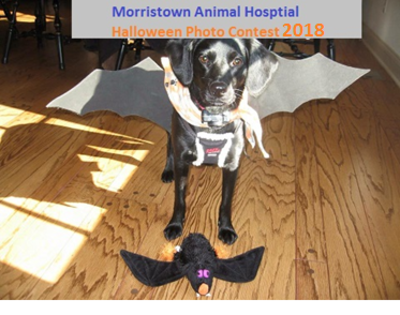 Halloween Photo Contest 2018 Morristown Animal Hospital